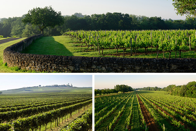 plateau de Roquefort / site de Castelviel / parcelle de St Brice